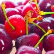 Sweet cherry — Foto de stock #2273760