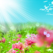 Spring Blooming — Stock Photo