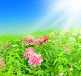 Frühling blüht — Stockfoto