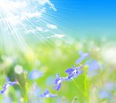 Flower. macro/ depth of field — Stock Photo