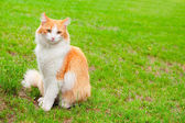 Orange white cat portrait — Stock Photo
