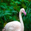 White flamingo portrait — Stock Photo