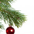 Christmas fir isolated — Foto Stock