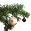 Christmas fir isolated — 图库照片