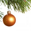 Christmas fir isolated - Stock Photo