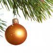 Royalty-Free Stock Photo: Christmas fir isolated