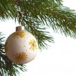 Stock Photo: Christmas fir isolated
