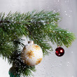 Christmas fir — Stock Photo #1631949