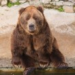 Stock Photo: Brown bear portrait
