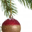 Christmas fir isolated — Stock Photo