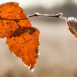Stock Photo: Frost Brich leaf