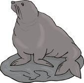 Vector illustration of a seal. — Stockvektor