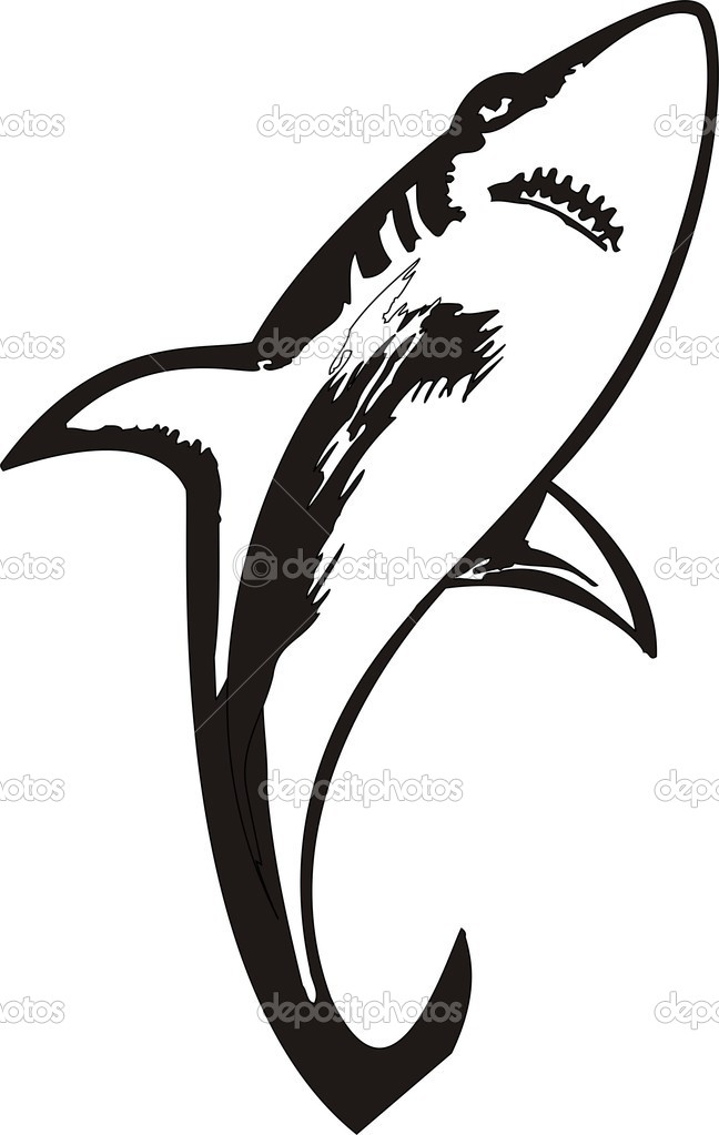 Beautiful  Shark Vector Illustration — Stock Vector #1604950