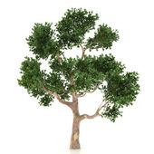 Tree isolated on a white background — Foto Stock