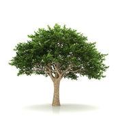 Drzewo na białym tle na białym tle — Zdjęcie stockowe