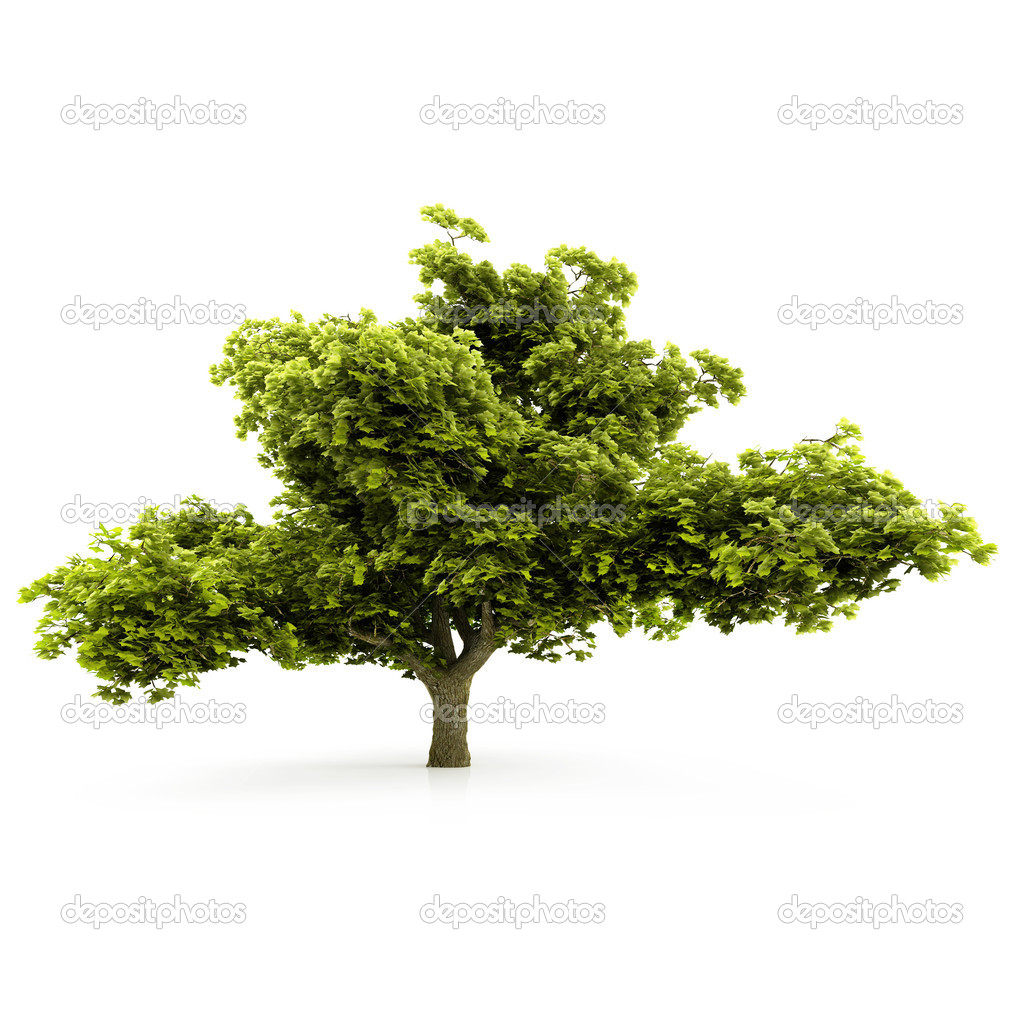 Tree isolated on a white background — Stock Photo #1996324