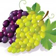 Stock Vector: Grape