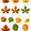 Autumn leaves — Stockvectorbeeld