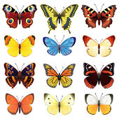 Set farfalla — Vettoriale Stock