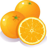 Oranges — Stock Vector