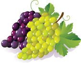 Grape — Stock Vector