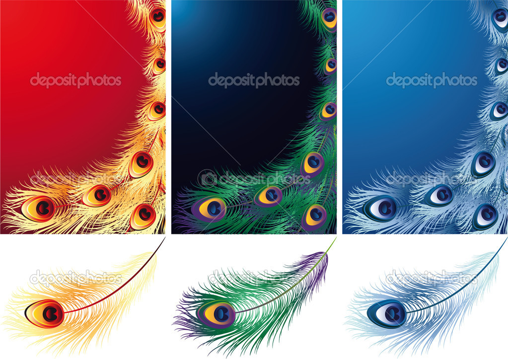 Vector illustration - peacock, phoenix and ice bird feather — Stock Vector #2011167