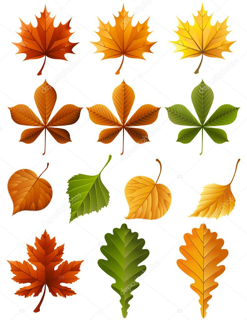Vector illustration - autumn leaves  icon set — Stock Vector #2015224