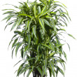 Stock Photo: Palm plant in flowerpot