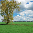 Royalty-Free Stock Photo: Alone tree in field
