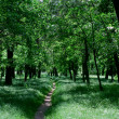 Small path in green sunny forest — Stock Photo