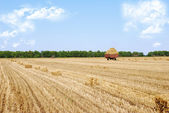 Wheat field rural landscape background — Stock Photo