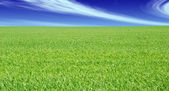 Green grass field and blue cloudy sky — Stock Photo