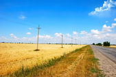Wheat field and road background — Stock Photo