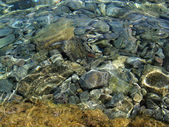 Stones under clear water — Stock Photo