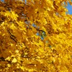 Autumn branch over blue sky — Stock Photo #1725121