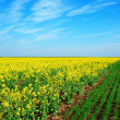 Spring rural field landscape — Stock Photo