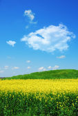 Green hill on canola field — Stock Photo