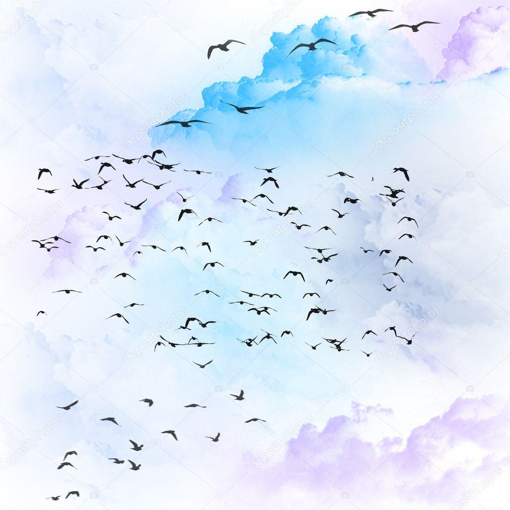 Flying birds in sky texture stock image