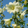 Beauty white flowers over clear blue sky - Stock Photo