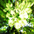 Sunbeams in green leaves — Stock Photo