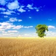 Alone tree in wheat field — Stock Photo