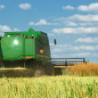 Stock Photo: Wheat harvesting