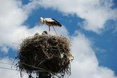 Stork i boet — Stockfoto