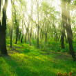 Sunbeams in spring forest — Stock Photo