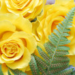 Beautiful yellow roses close-up — Stock Photo