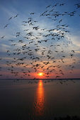 River sunset and seagulls silhouettes — Stock Photo