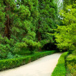 Stock Photo: Park landscape