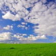 Stock Photo: Landscape with grass and cloudy sky