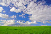 Landscape with grass and cloudy sky — Stock Photo