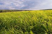 Idyllic rural landscape — Stock Photo